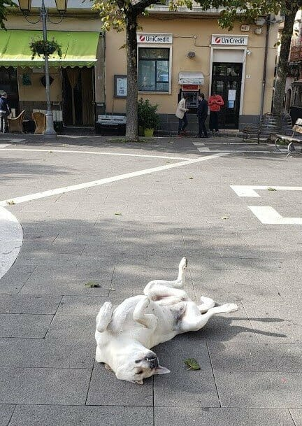A yellow lab rolled over on its back in the middle of a village square