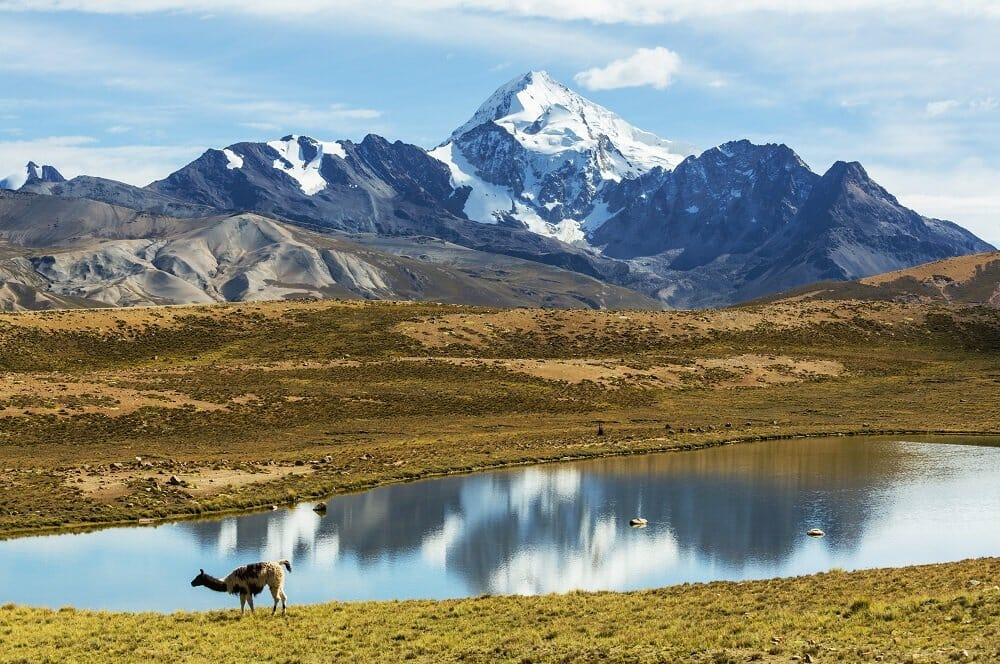 High mountains of Bolivia with a lake and a llama in the foreground