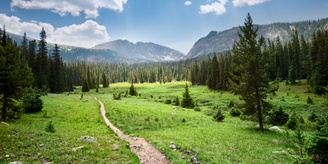 A hiking path splits green meadows with lots of pine trees; mountains in the background