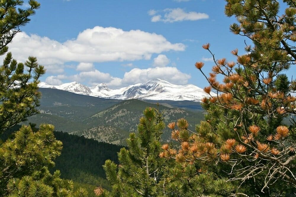 Snow covered mountain tops visible through pine tree tops; blue sky with some clouds